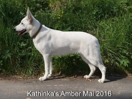 Kathinka's Amber